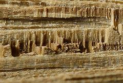 Eiche gespalten, rezent Untere Bildkante ca. 7 mm