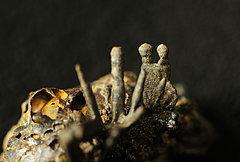 Rostige Auswüchse auf einer Gürtelschließe aus einem Männergrab