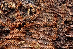 Ziernaht auf einem frühmittelalterlichen Textil aus einer Frauenbestattung